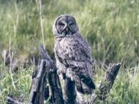 Wildlife_HM