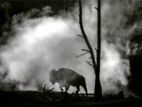 Wildlife 1st Place - Ancestral Shadows - Ricky Harney