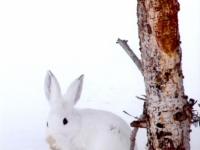 Wildlife HM - Lisa Culpepper - Shhh! Don't Tell Them I'm Here!