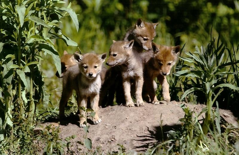 Wildlife - 1st Place