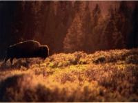 Wildlife 3rd Place -- Steven Donovan