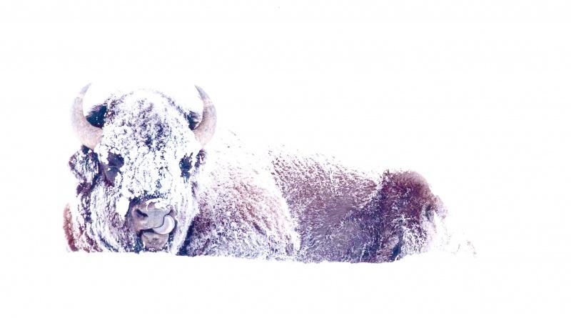 """Wildlife 1st - """"Happy Snow Day!"""""""
