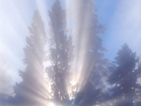 "Scenic 2nd - ""Steamy Morning Sun Beams"""