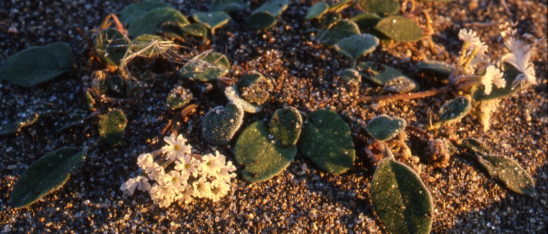 Botany Seminar: Learn About YNP's Amazing Plants!