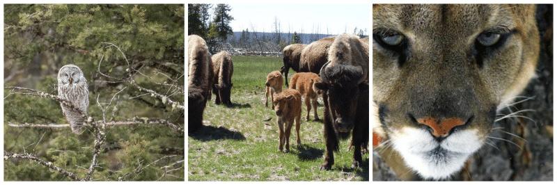 Upcoming Wildlife Seminars