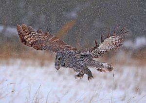 """Dinner Time"" / Wildlife 1st Place / Steven M. Derrick II /  Xanterra - Mammoth"